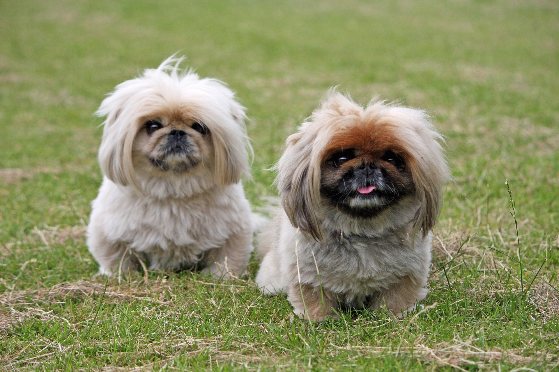 Popular Dog Breeds from China