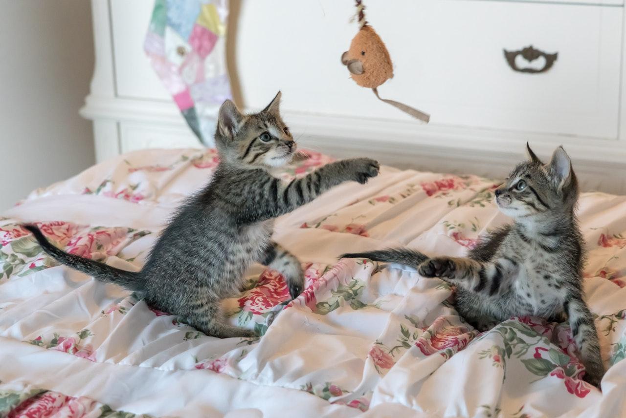Amazing Moving Cat Toys