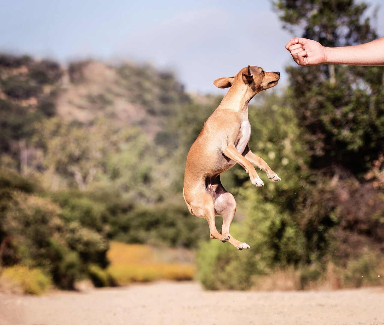Why Do Dogs Jump Around Their Treats